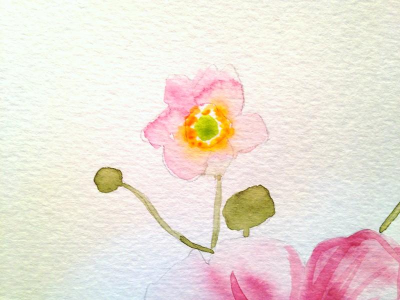 Watercolour anemones
