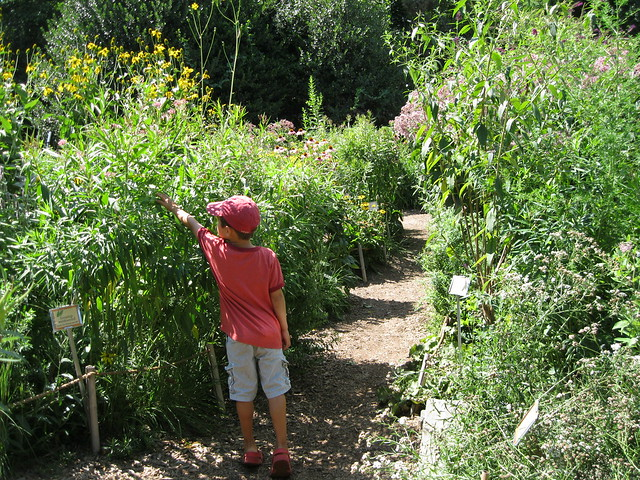 Children will explore plants and pollinators in an expanded Meadow Zone. Photo by Ashley Gamell.