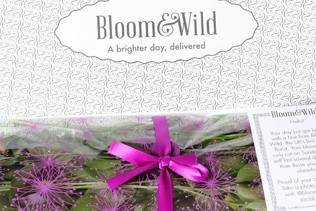 Wild and Bloom