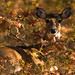 1st Place - Fauna - Kathy Turner - Camouflaged
