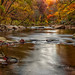 Wissahickon Trail by Dante Fratto Photography