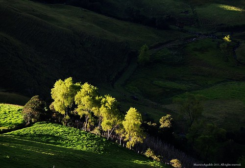 light tree luz rural sunrise arbol dawn colombia amanecer potrero antioquia sonson blinkagain