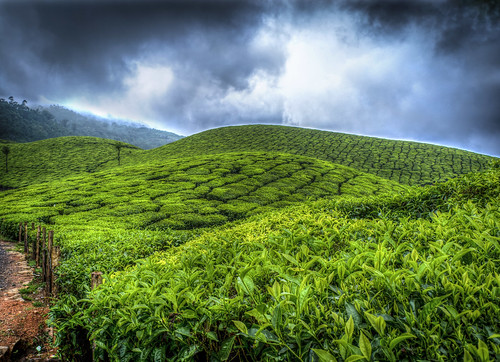 sky green landscape tea kerala abhishek hdr pp munnar teaestate abhisheknair