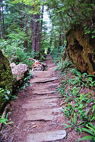 Cape Scott Trail to Nissen Bight, Cape Scott Provincial Park, North Vancouver Island, British Columbia, Canada