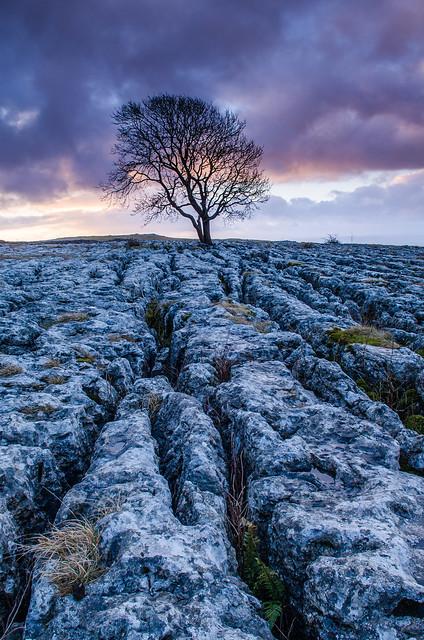Anniison - Lone Tree, Malham at Dawn