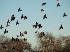animal migration, animal, fauna, flock, bird migration, bird,