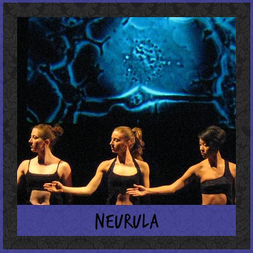 Neurula