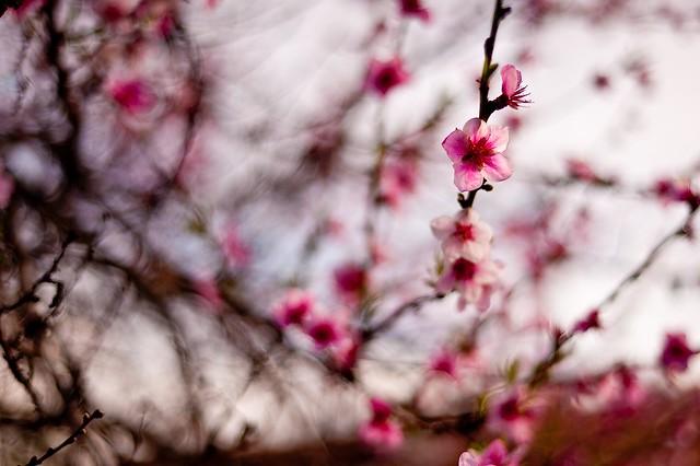 Spring Time 18