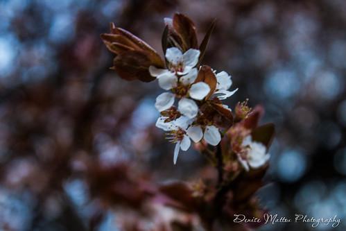 26/47: Blooming