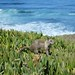 La Jolla ocean squirrel by Oleg.
