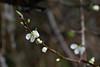 Spring blossom_edited-1