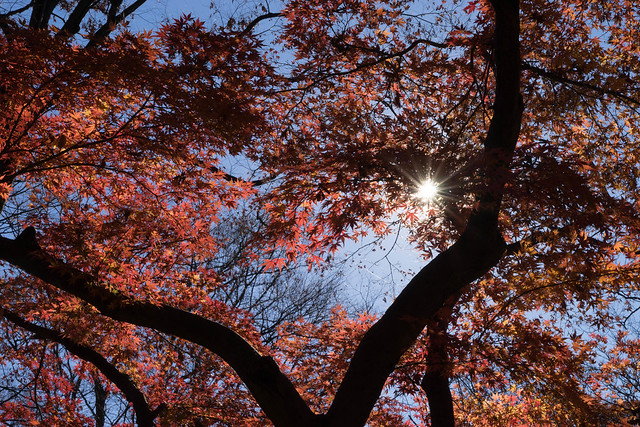 Yoyogi Park,TOKYO, Sony ILCE-7, Tamron SP AF 28-75mm F2.8 XR Di LD Aspherical IF