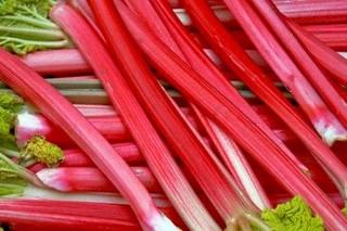 rhubarbe forcée