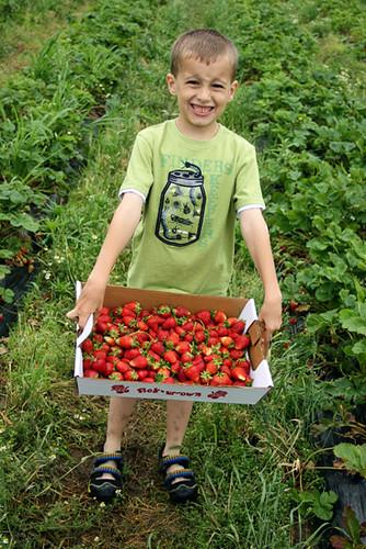 Nat_Big-crate-of-strawberries