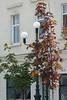 2012.08.12 Timisoara 001
