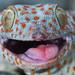 "Aha... Aha... (^_^)/ Gotcha! Say ""cheese""... ^o^ ~ gekko gecko ~ tokay gecko from Bali by bocavermelha-l.b."