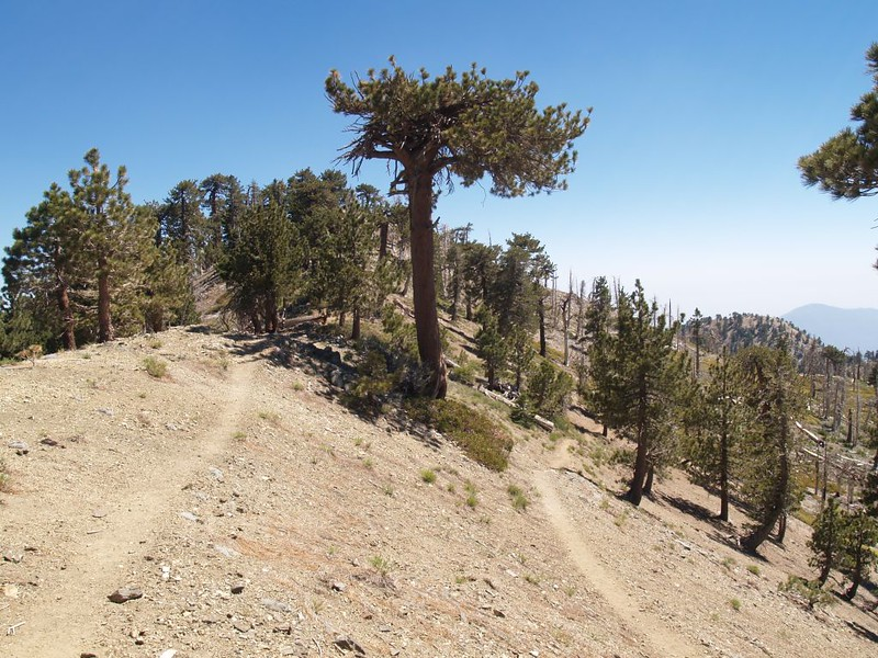 Summit trail to Mount Hawkins where it intersects the PCT on the northeast ridge
