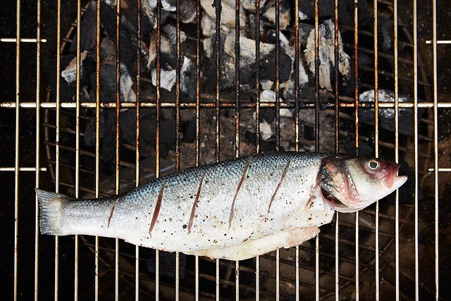 Fish on grill