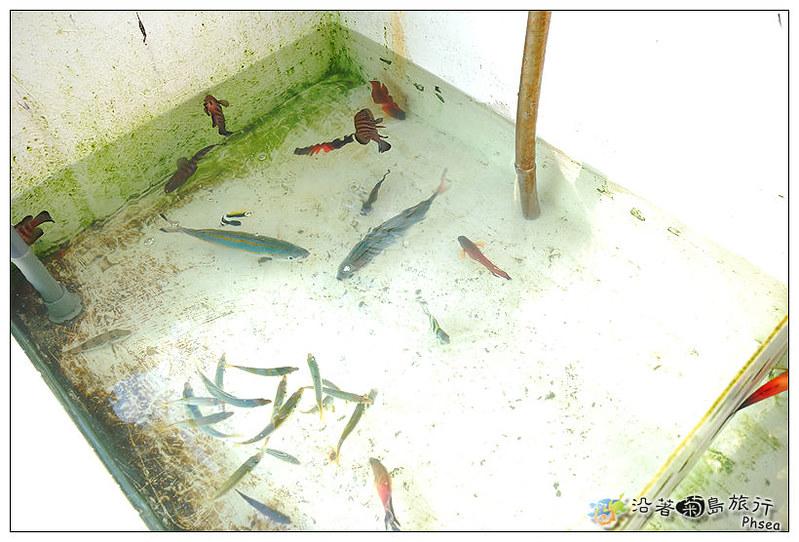 2013元貝休閒漁業_66