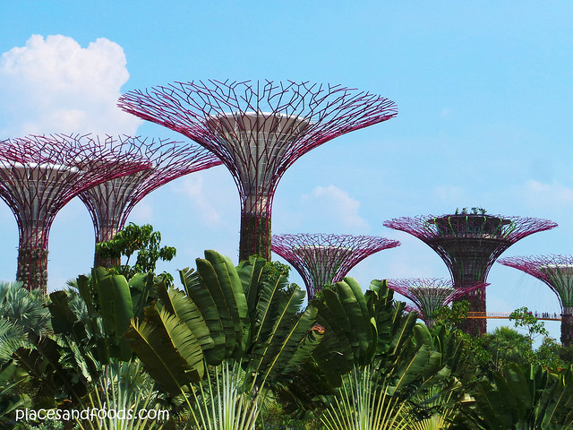 gardens by the bay huge trees