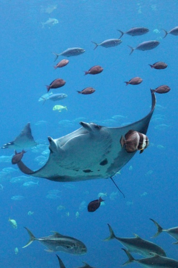 Georgia Aquarium, 9