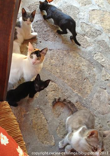 Pirgos Restaurant Katzen
