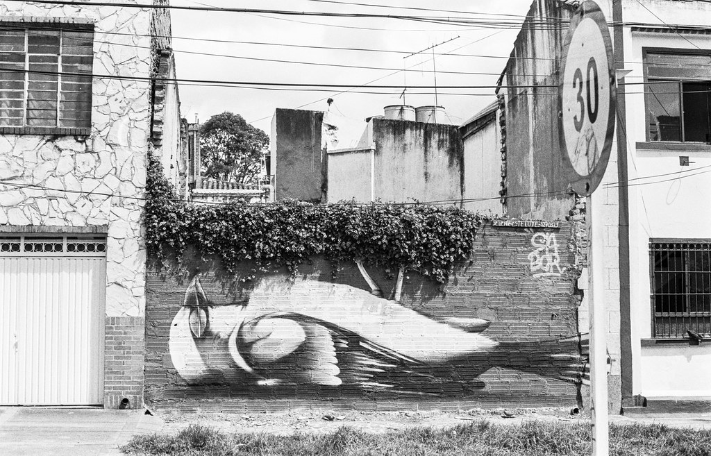 dead bird graffiti on wall in bogota colombia.jpg
