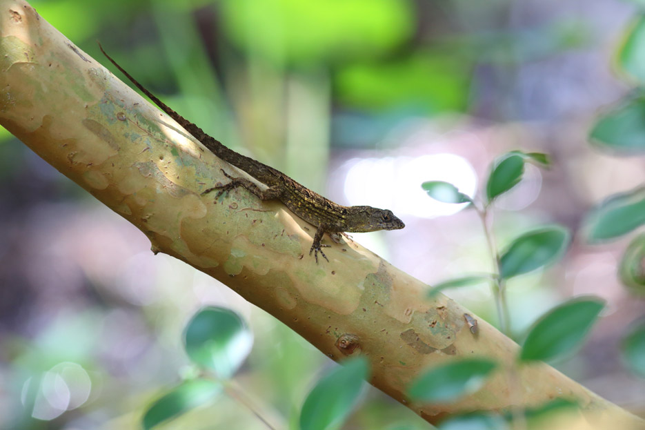 073113_03_reptile_lizard02