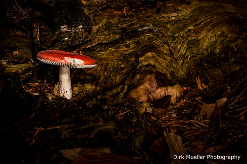 Mushroom III by Dirk Mueller Photography