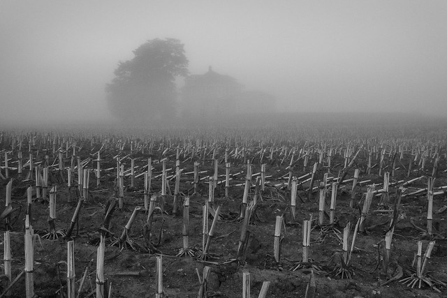 Farm, Fog, Corn Field, Monochrome, B&W, Farmhouse