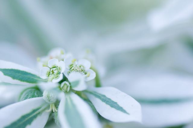 写真_white_&_green