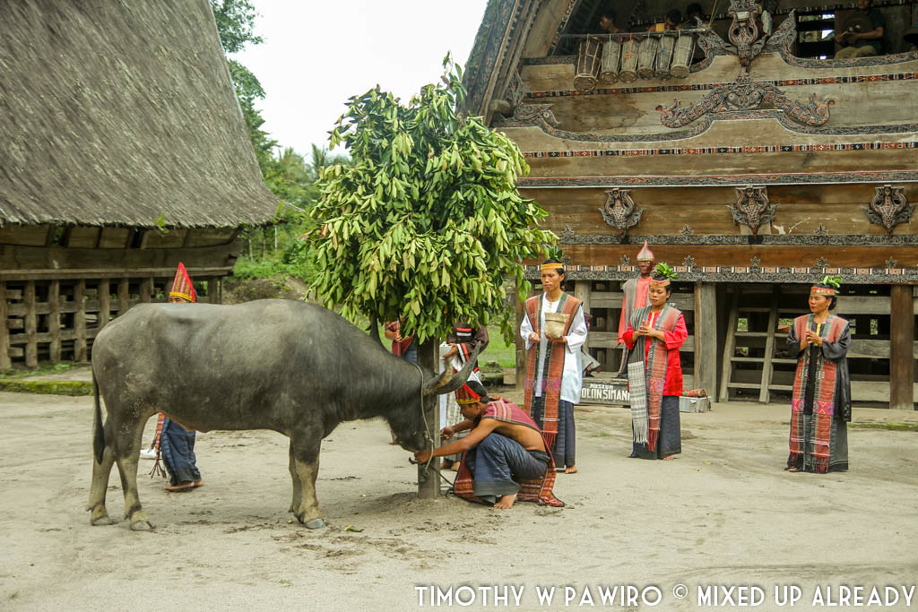 Indonesia - Medan - Museum Huta Bolon Simanindo - Mangalahat Horbo - Gondang Lae-lae