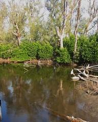 雙春濱海遊憩區內紅樹林及防風林的混林,圖片來源:台灣環境資訊協會