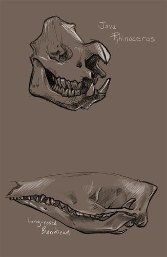 Skull Reference 2