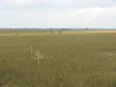 wetland(0.0), tundra(0.0), grazing(0.0), plateau(0.0), salt marsh(0.0), safari(0.0), marsh(0.0), bog(0.0), prairie(1.0), land lot(1.0), steppe(1.0), ecoregion(1.0), field(1.0), grass(1.0), plain(1.0), natural environment(1.0), meadow(1.0), pasture(1.0), rural area(1.0), savanna(1.0), grassland(1.0), wildlife(1.0),