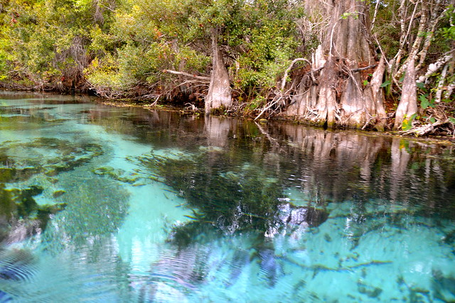Paddling Adventures on the Weeki Wachee Springs, Florida