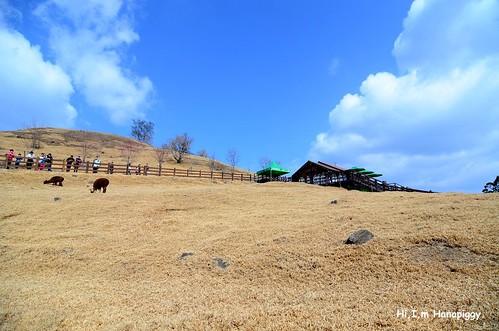 清境農場(72)
