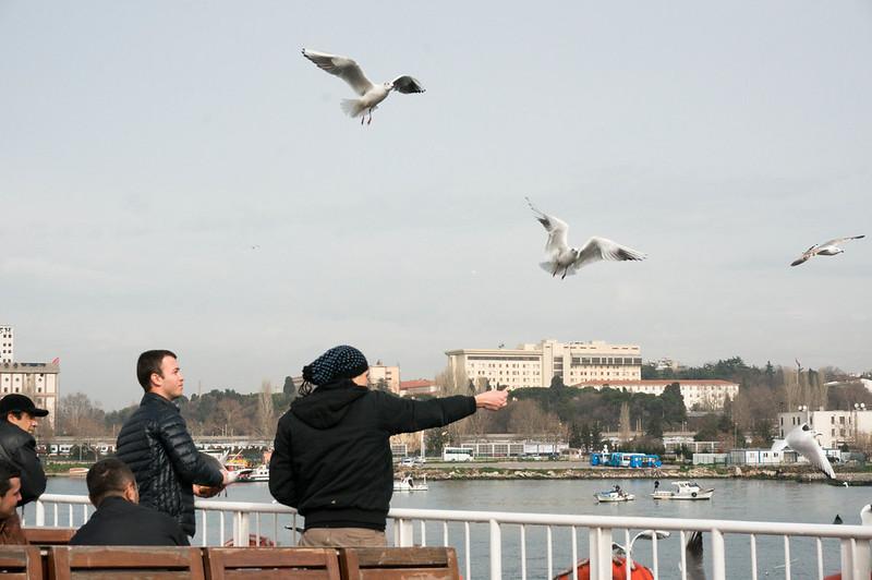 20140302_seagulls