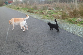 Dakota and Ebony enjoying walk