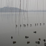 DSC_0393-北海公园-鸭子