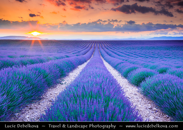 France - Provence - Valensole - Lavender Field at Sunset