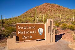 Saguaro National Park (3-14-17)