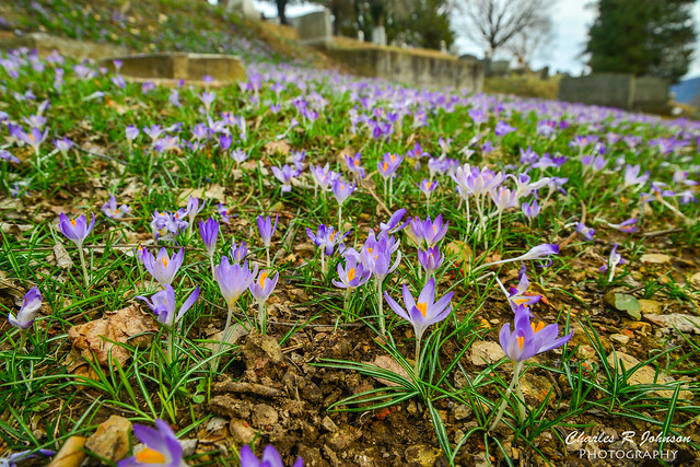 Early Spring Wildflowers in Harpers Ferry