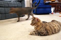 The Cats rule at Nana and GrandPa's house