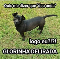Glorinha é Top ! #blogauroradecinemaindica  #amazing #animals #dogs #cool #20likes #instagood @glorinhadelirada