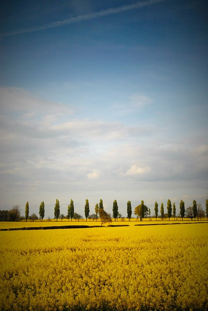Wiltshire field