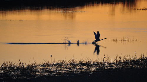 bird sunrise spring pori