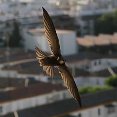 Aves de Sevilla