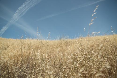 california ca sky field clouds canon raw sonoma sigma contrails goldenstate sigma2470mm sonomalake 5dmarkiii
