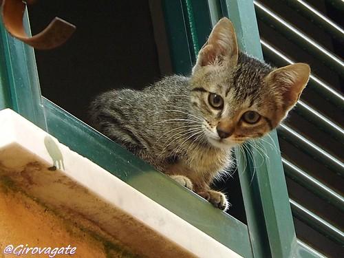 micio alla finestra